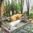 Hình ảnh Lò Quay Chó0